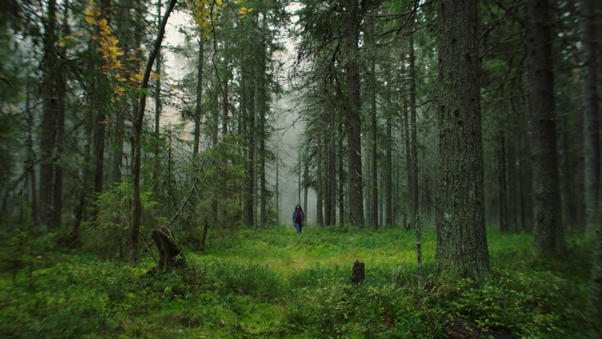 The Swedish forest – where the future grows